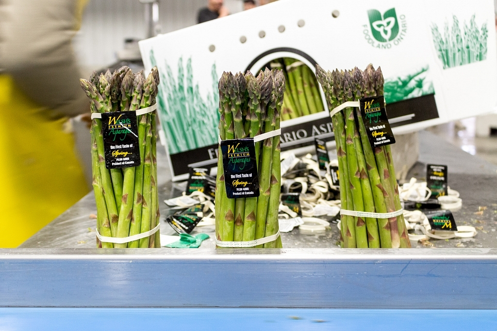 Asparagus stalks packaged at Welsh Brothers' Farms